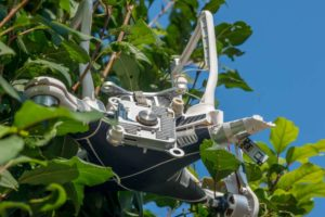 Drohne Absturz in Baum
