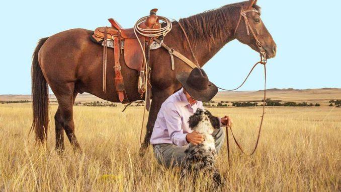 Tierhaftpflichtversicherung